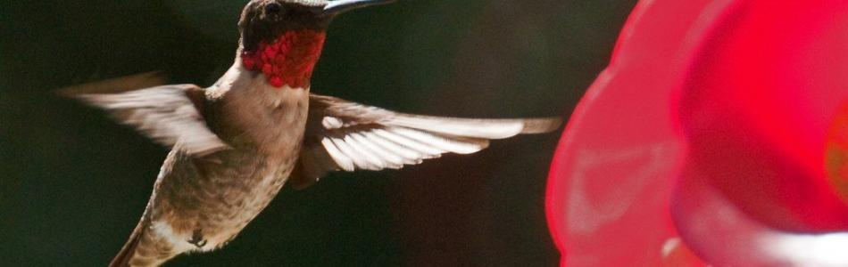 Hummingbird Content Tips